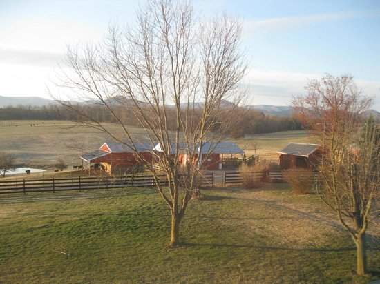 Piney Hill Bed & Breakfast: Morning view from Emma Ruffner Rogers window. (2nd floor)