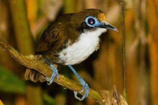 Tiskita Jungle Lodge: Birds