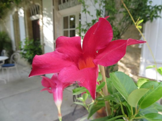Le Cadran Solaire : Flowers on the porch