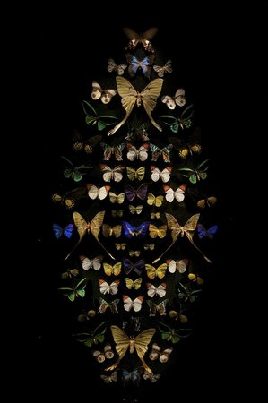Tasmanian Museum and Art Gallery: Butterfly Display.