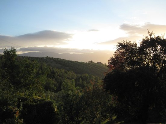 Podere La Casellina: Sunrise over the olive groves