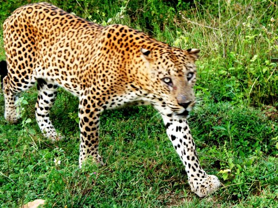 Laya Safari: Amazing world of Safari