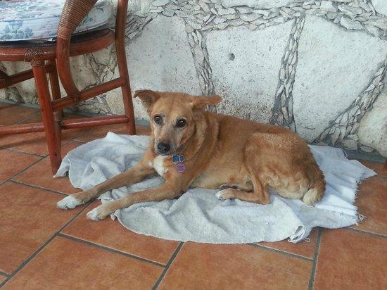Alicia's Bed & Breakfast: Venadita...senior watch dog