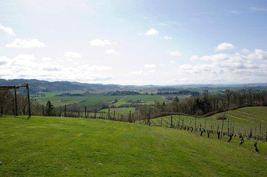 Amity Vineyards: view