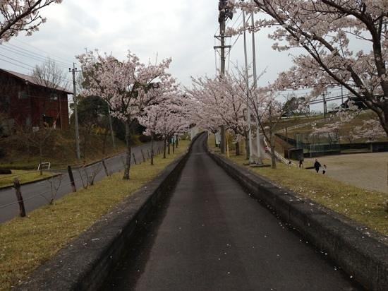 Kirishima, Nhật Bản: 桜満開 ゴーカート 二人乗りで500円!