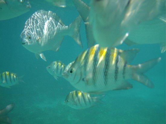 Garrafon de Castilla: underwater camera