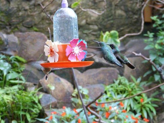 Jardin de los Picaflores: Colibrí