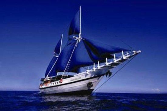 Dive The World Maldives: Maldives Siren