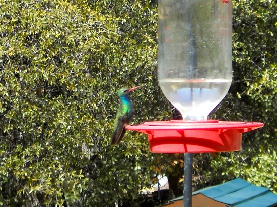 Madera Kubo B&B: Hummer feeding of deck.