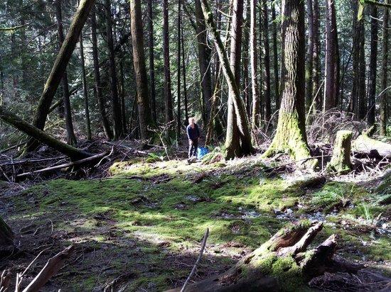 Sasquatch Crossing EcoLodge: Local Hikes