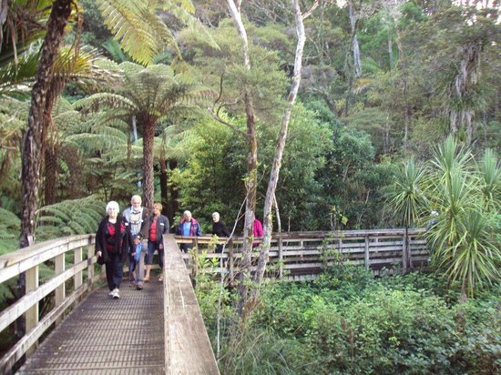Go Great Barrier Island - Day Tours: Hot Springs Trail