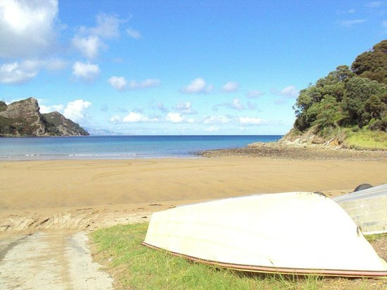 Go Great Barrier Island - Day Tours: Sunday morning rush