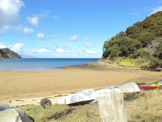 Go Great Barrier Island - Day Tours: Paradise found