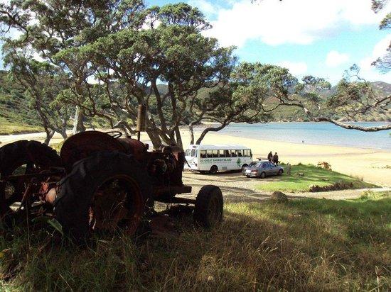 Go Great Barrier Island - Day Tours: Lovely Okupu....
