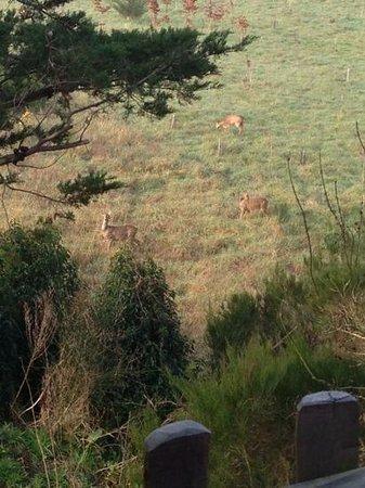 La Gree des Landes: chevreuils au pied de la cabane le matin