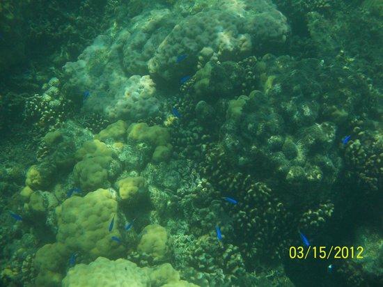 Pandan Island: Corals