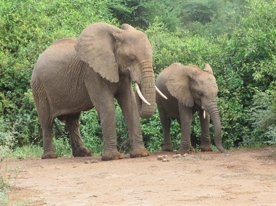 Lake Manyara Serena Lodge: Elephant family crossing the road in Lake Manyara National park.
