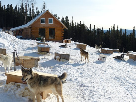 1st Alaska Outdoor School: Cabin & dogs