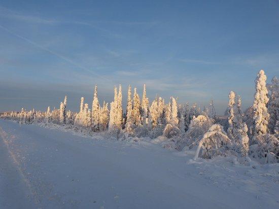 1st Alaska Outdoor School: Snow encrusted trees