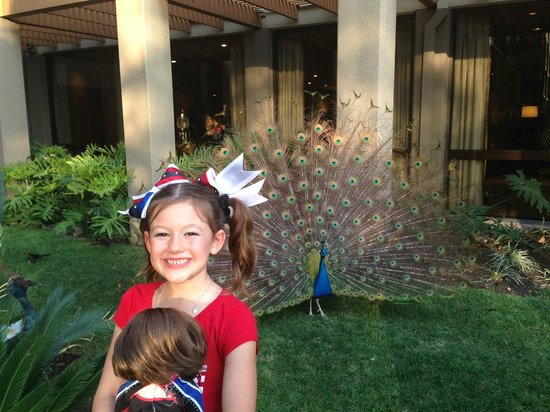 Marriott Plaza San Antonio: Peacock