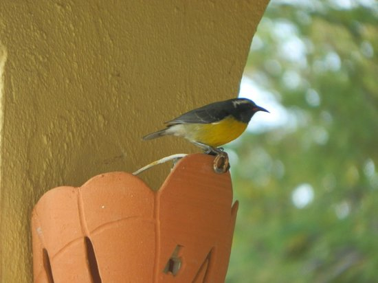 Inn La Galleria: National bird at breakfast