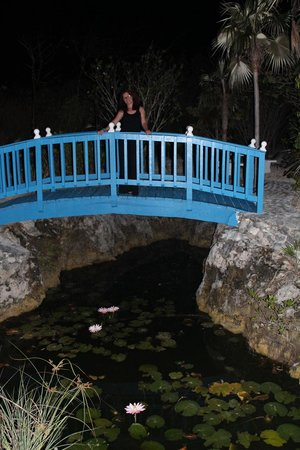 Walton's Mango Manor Bed & Breakfast: The pond built by George, with flowers that bloom at night
