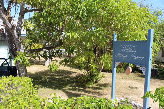 Walton's Mango Manor Bed & Breakfast: Mango Manor-front yard