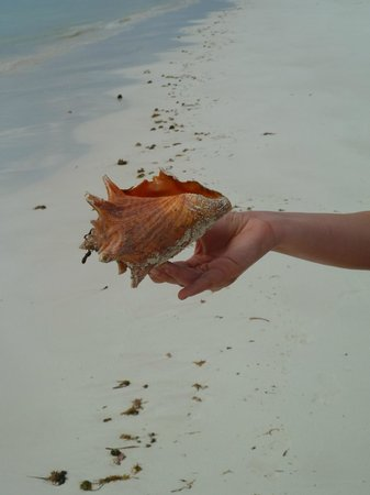 Chad4Nature Tours - Private Tours: conch on the beach