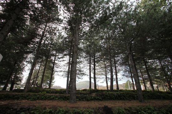 Casale Poggio del Tiglio: Parco