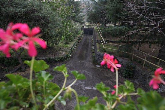 Casale Poggio del Tiglio: Vista viale ingresso