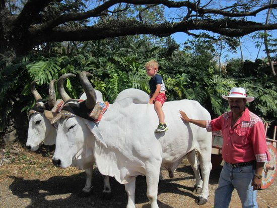 Adventure Tours Hacienda Guachipelin: Ox Cart