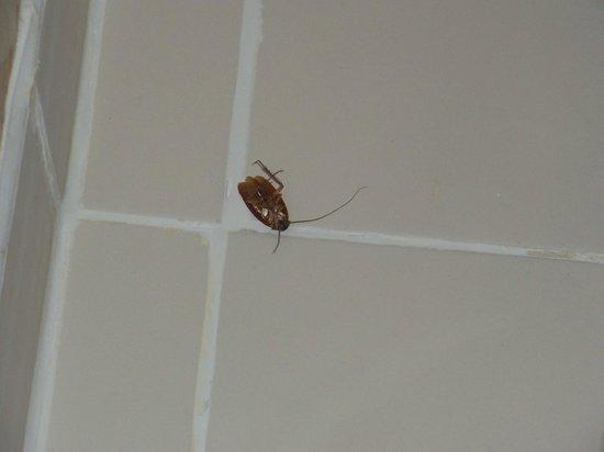 iStay Hotel Ciudad Juarez: Bathroom buddy. :)