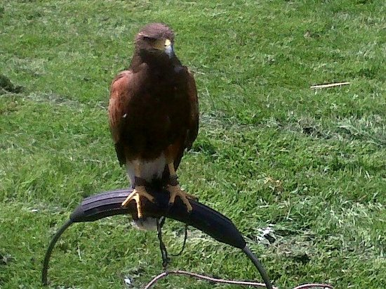 Rushmoor Country Farm Park and Falconry Centre