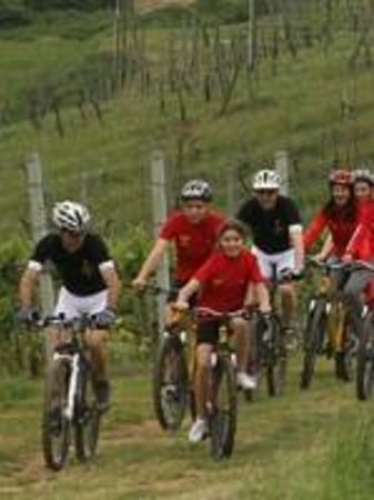 Tuscany Wine and Bike - Day Tour: Tour in MTB vicino a San Gimignano