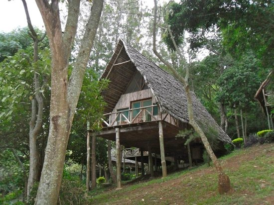 Karama Lodge & Spa: our cabin in the trees