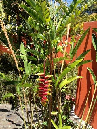 Xandari Resort & Spa: Lush tropical gardens