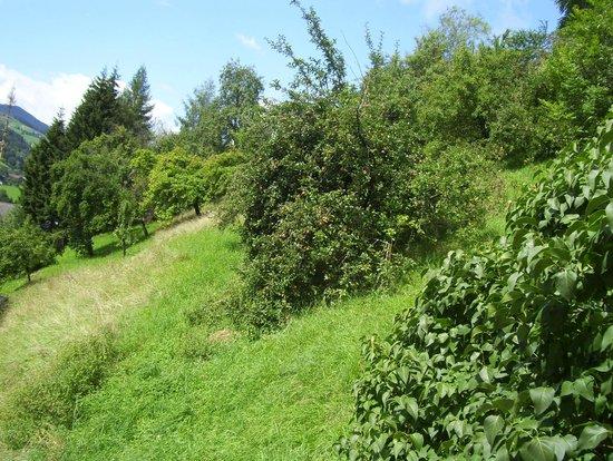 Gasthof zur Post: Garten