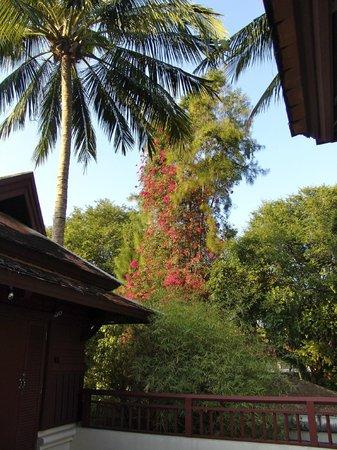 Chaweng Regent Beach Resort: The big trees