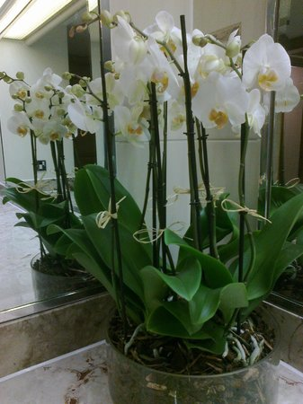 The Rubens at the Palace: White orchids in the downstairs ladies' loo
