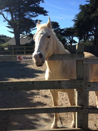 San Francisco Zoo: Ben (a horse at the petting zoo--but you couldn't pet him)