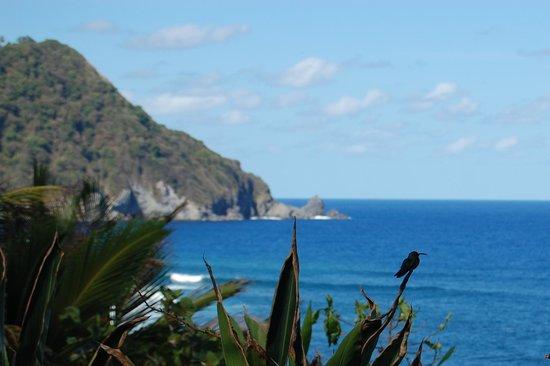 Jungle Bay, Dominica: Hummingbird by the pool at Jungle Bay