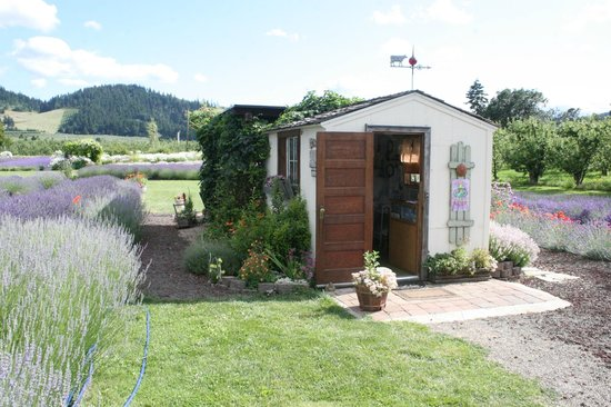 Hood River Lavender: This is the shed in the middle fo the garden they sell lavender merchandise from.