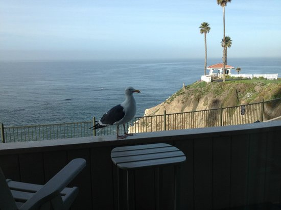 Shore Cliff Hotel: We were visited by a curious seagull.