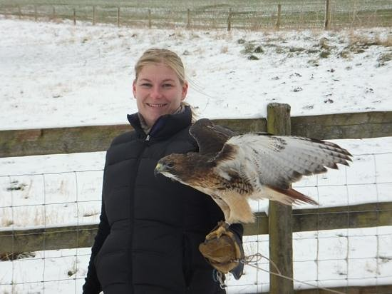 Black Mountains Falconry Centre: Even in the wind, these birds manage beautifully