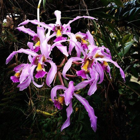 Orquideas Moxviquil: orquideario moxviquil