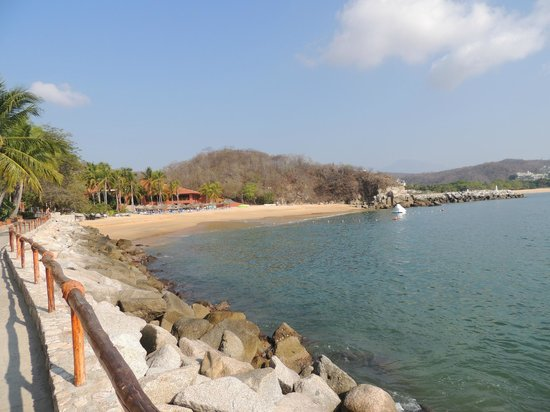 Las Brisas Huatulco: amazing coral reef and fish life....the best part of this resort by far