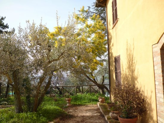 Agriturismo San Rocco : mimosa in fiore