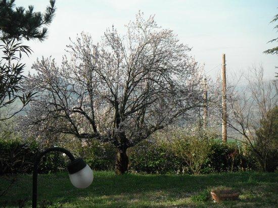 Agriturismo San Rocco : Vista dalla finestra della camera