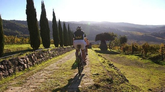 Tuscany Wine and Bike - Day Tour: Tuscany Wine and Bike