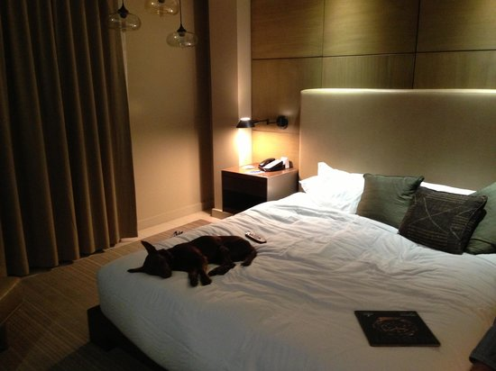 Hotel La Jolla, Curio Collection by Hilton: Really lovely to have a great dog friendly hotel option